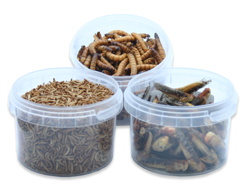 Freeze-Dried Insects